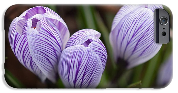 Flora iPhone Cases - Unopened Crocus Flowers iPhone Case by Robert Carr