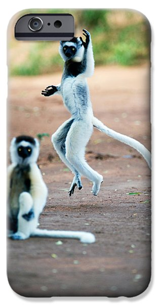 Wild Animals iPhone Cases - Verreauxs Sifaka Propithecus Verreauxi iPhone Case by Panoramic Images