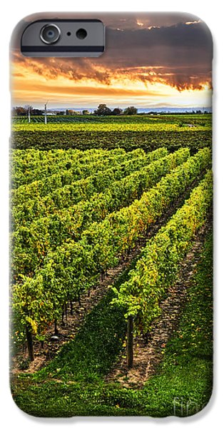 Fields iPhone Cases - Vineyard at sunset iPhone Case by Elena Elisseeva