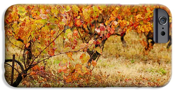 Midi iPhone Cases - Vineyard In Autumn, Gaillac, Tarn iPhone Case by Panoramic Images