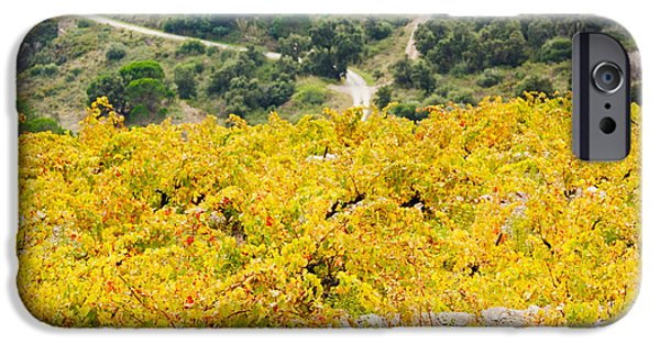Languedoc iPhone Cases - Vineyards, Collioure, Vermillion Coast iPhone Case by Panoramic Images