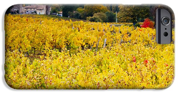 Autumn iPhone Cases - Vineyards In Autumn, Montagne, Gironde iPhone Case by Panoramic Images