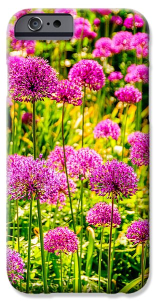 Purple Sensation iPhone Cases - Violet And Green Bed Of Flowers iPhone Case by Colin Utz