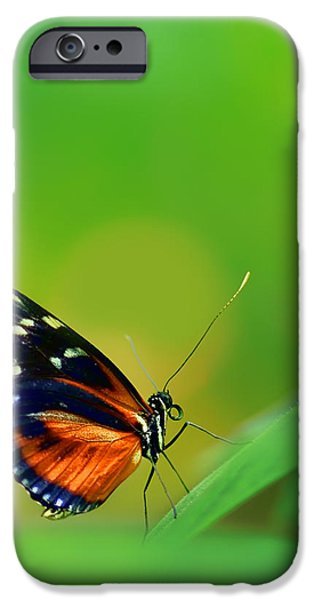Fauna iPhone Cases - Walking on Sunshine iPhone Case by Nikolyn McDonald