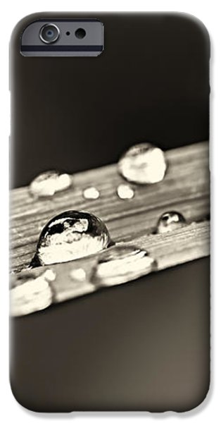 Water drops on grass blade iPhone Case by Elena Elisseeva