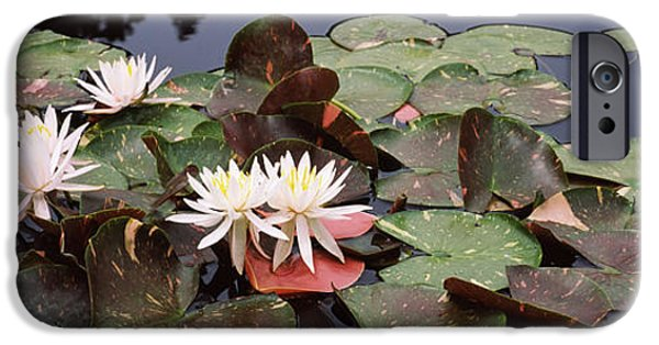 Botanical iPhone Cases - Water Lilies In A Pond, Sunken Garden iPhone Case by Panoramic Images