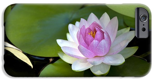 Exoticism iPhone Cases - Water lily iPhone Case by King Wu