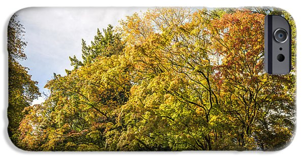 Turning Leaves iPhone Cases - Westonbirt Arboretum iPhone Case by Amanda And Christopher Elwell