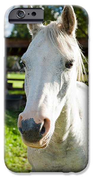 Gray Hair iPhone Cases - White horse  iPhone Case by Ulrich Schade