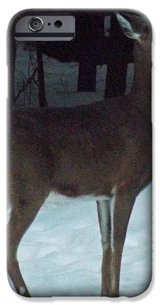 White Tail Deer iPhone Case by Brenda Brown