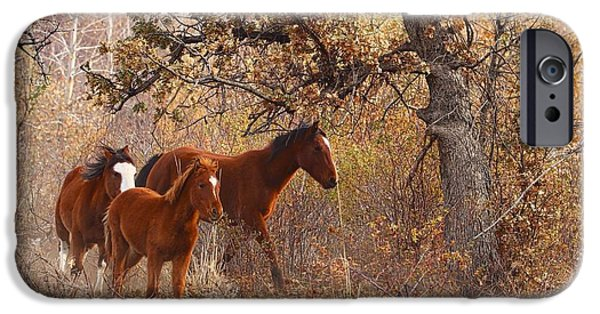 Nation iPhone Cases - Wild horses iPhone Case by Lynn Hopwood