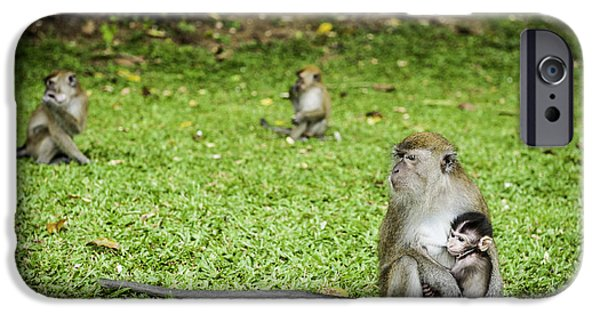 States iPhone Cases - Wild Monkey with baby feeding at Penang botanical gardens  iPhone Case by Project B