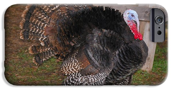 Eastern Wild Turkey iPhone Cases - Wild Tom iPhone Case by Thea Wolff