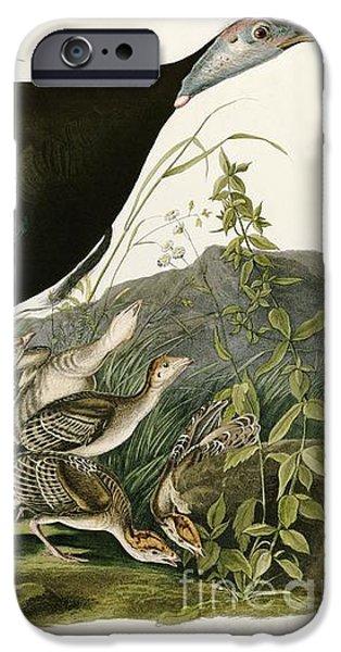 Zoology Paintings iPhone Cases - Wild Turkey by John James Audubon iPhone Case by Pablo Romero