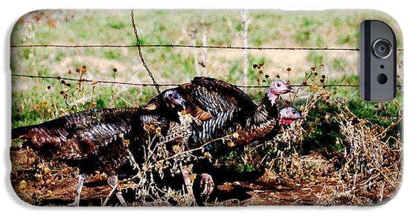 Eastern Wild Turkey iPhone Cases - Wild Turkeys iPhone Case by Thea Wolff