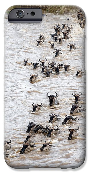 Fauna iPhone Cases - Wildebeests Crossing A River, Mara iPhone Case by Panoramic Images