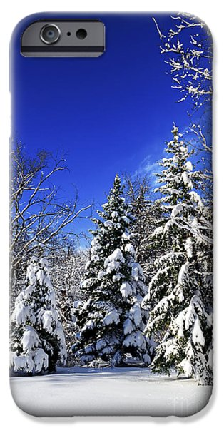 Park Scene iPhone Cases - Winter forest under snow iPhone Case by Elena Elisseeva