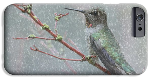 Winter Storm iPhone Cases - Wintering Hummingbird iPhone Case by Angie Vogel