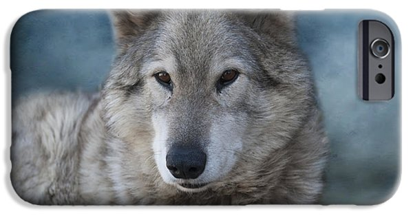 Wolf Photographs iPhone Cases - Wolf iPhone Case by Juli Scalzi