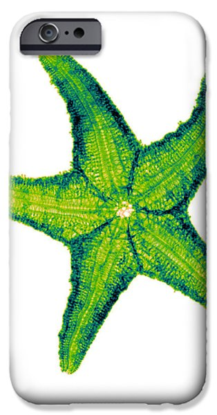 Radial Symmetry Photographs iPhone Cases - X-ray Of Starfish iPhone Case by Bert Myers