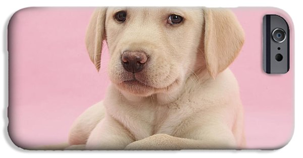 House Pet iPhone Cases - Yellow Labrador Retriever iPhone Case by Mark Taylor