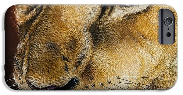 African Lion Art iPhone Cases - Young Lion iPhone Case by Jurek Zamoyski