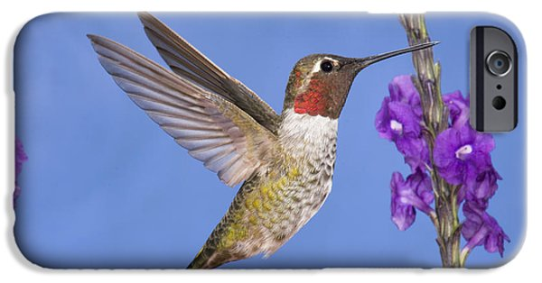 Feeding Young iPhone Cases - Annas Hummingbird iPhone Case by Anthony Mercieca