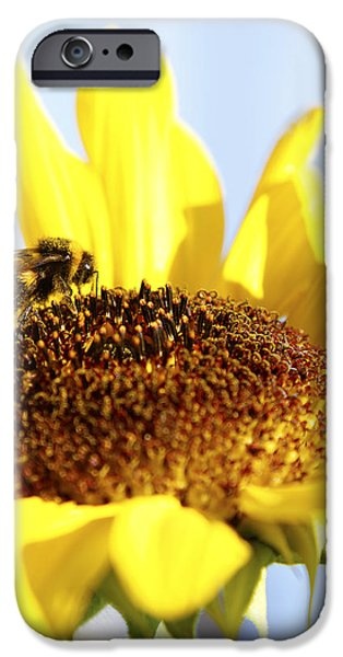 Bee iPhone Cases - Bee on flower iPhone Case by Les Cunliffe