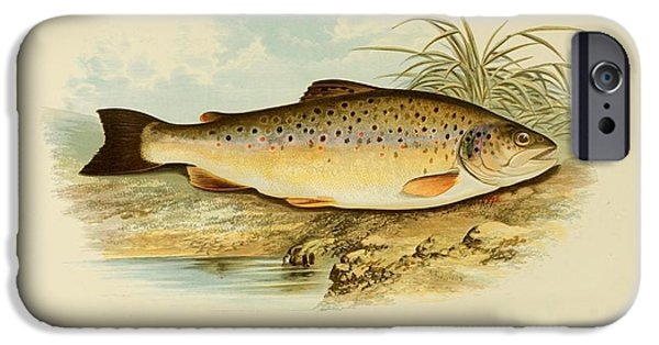 Zoological Paintings iPhone Cases - British freshwater fishes iPhone Case by LoveMap