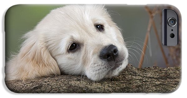 Dog Close-up iPhone Cases - Golden Retriever Puppy iPhone Case by John Daniels