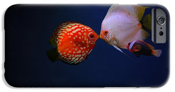 Clown Fish Photographs iPhone Cases - Love iPhone Case by Heike Hultsch