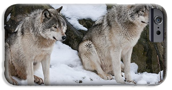 Wolf Image iPhone Cases - Timber Wolves iPhone Case by Wolves Only