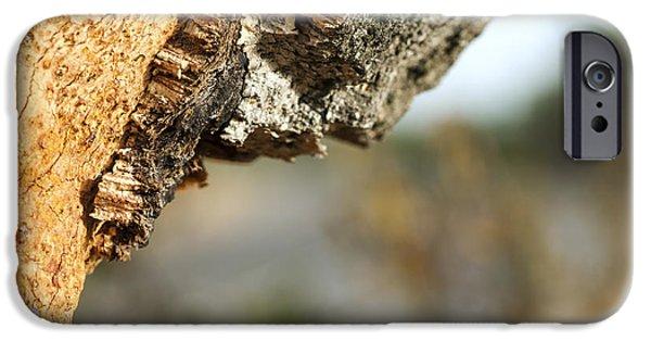 Board iPhone Cases - A corkwood tree iPhone Case by Deyan Georgiev