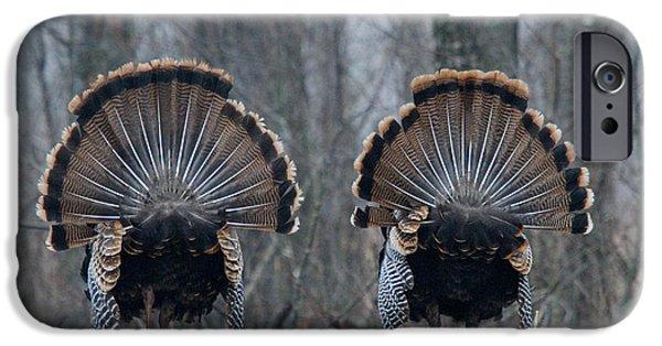 Eastern Wild Turkey iPhone Cases - Jake Eastern Wild Turkeys iPhone Case by Linda Freshwaters Arndt