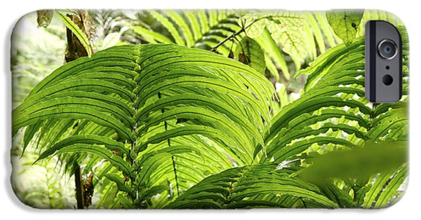 Rain iPhone Cases - Jungle leaves iPhone Case by Les Cunliffe