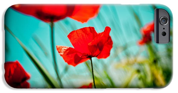 Framed Pyrography iPhone Cases - Poppy field and sky iPhone Case by Raimond Klavins