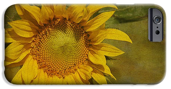 Floral Photographs iPhone Cases - Sunflower iPhone Case by Cindi Ressler