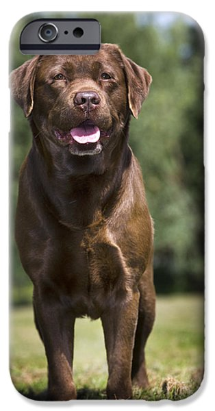 Dogs iPhone Cases - 110506p183 iPhone Case by Arterra Picture Library