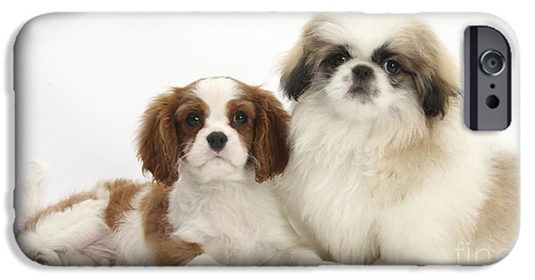 Pekingese iPhone Cases - Puppies iPhone Case by Mark Taylor