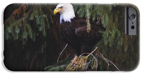 Sea Birds iPhone Cases - Bald Eagle iPhone Case by Art Wolfe