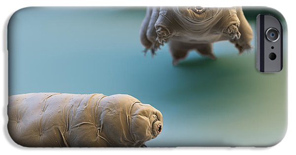Color Enhanced iPhone Cases - Water Bear iPhone Case by Eye of Science and Science Source