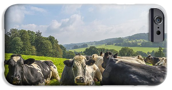Limburg iPhone Cases - Cows in a meadow in summer iPhone Case by Jan Marijs