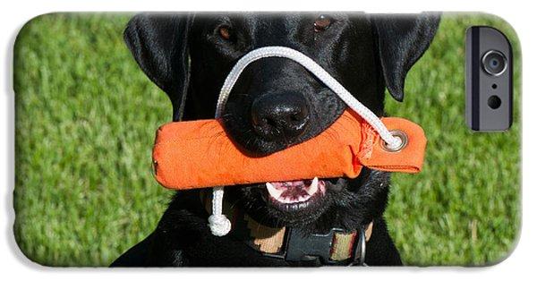 Black Dog iPhone Cases - Black Labrador Retriever iPhone Case by William H. Mullins