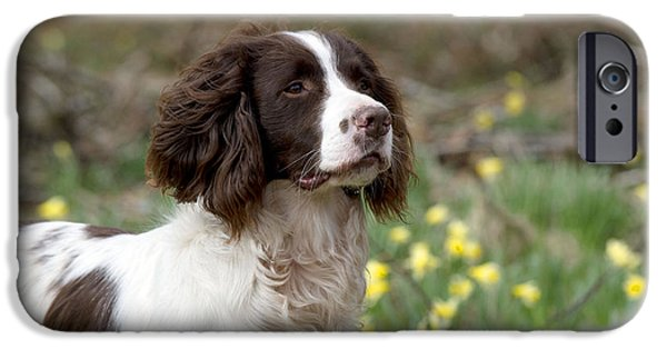 Dog Close-up iPhone Cases - English Springer Spaniel iPhone Case by John Daniels