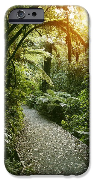Pathway iPhone Cases - Forest trail iPhone Case by Les Cunliffe
