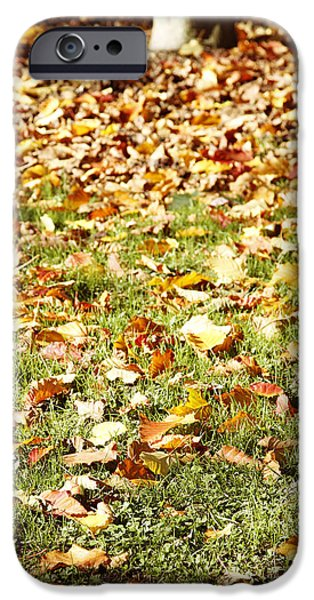 Fall Grass iPhone Cases - Autumn iPhone Case by Les Cunliffe