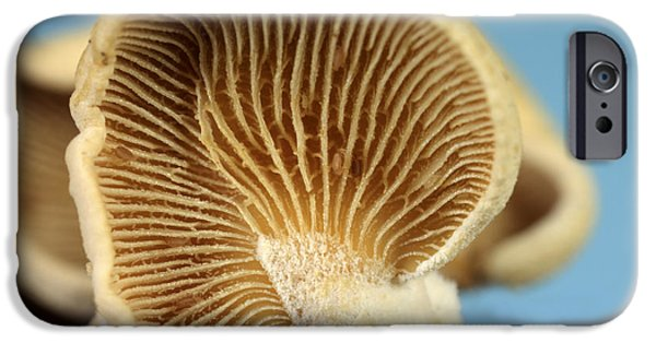 Luminescent iPhone Cases - Luminescent Mushroom, Panellus Stipticus iPhone Case by Ted Kinsman
