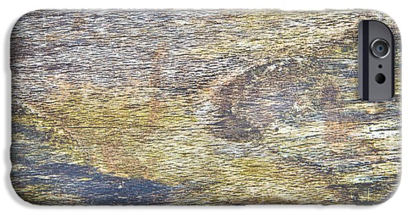 Lichens iPhone Cases - Wood background iPhone Case by Tom Gowanlock