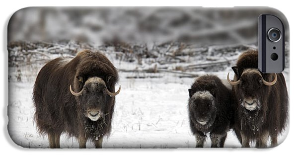 Recently Sold -  - Fauna iPhone Cases - Muskox iPhone Case by Mark Newman