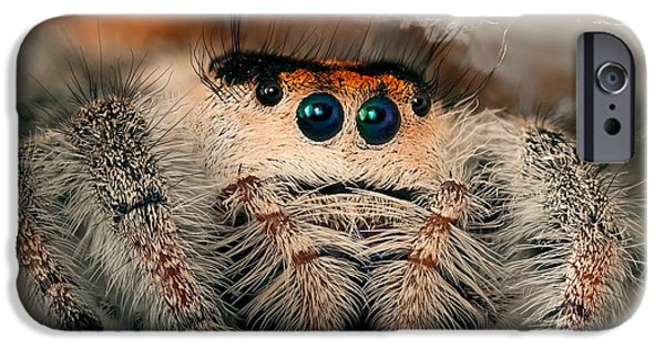 Jumping Spiders iPhone Cases - Regal Jumping Spider iPhone Case by Scott Linstead
